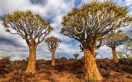 Namíbia, Quiver Tree, rochas, natureza