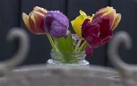 Red, purple, yellow tulips, water droplets