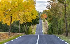 Estrada, árvores, outono, natureza