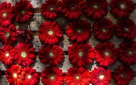 Algunas flores de gerbera roja, madera
