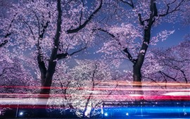 Preview wallpaper Spring, sakura blossoms, trees, night, light lines
