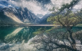 Preview wallpaper Tree, lake, mountains, water reflection, clouds, fog, hazy