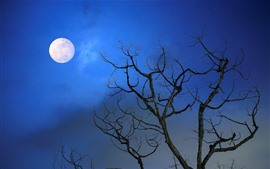 Preview wallpaper Tree, moon, blue sky, night