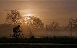 Árvores, nevoeiro, manhã, bicicleta, esporte, silhueta