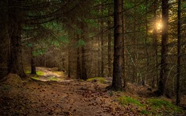 Trees, forest, path, sun rays, dusk