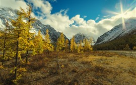 Trees, mountains, sun rays, autumn