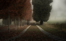 Preview wallpaper Trees, path, fog, morning, countryside, nature