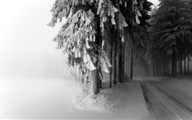 Trees, snow, path, fog, morning, winter