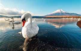 Preview wallpaper White swans, lake, water, mountains