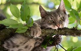 山猫、木、緑の葉