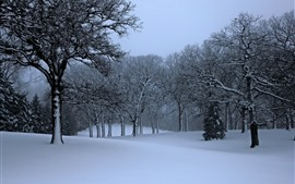 Preview wallpaper Winter, trees, snow, nature scenery