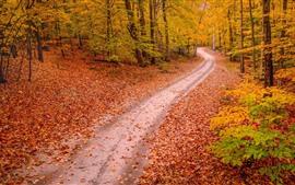 Outono, árvores, caminho, cenário da natureza