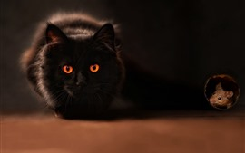 Preview wallpaper Black cat, orange eyes, mouse