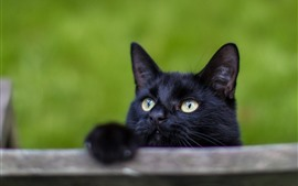 Preview wallpaper Black cat, yellow eyes, look, hazy background