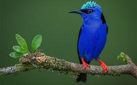 Синее перо птицы, ветка дерева, листья