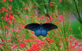 Blue wings butterfly, spider web, red flowers