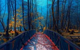 Босния, деревья, мост, осень, парк