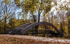 Puente, árboles, otoño, parque