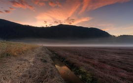 Canada, Pitt Meadows, mountains, creek, fog, morning