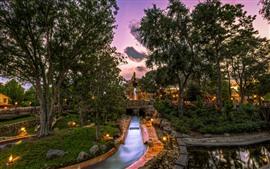 Disneyland, parque, arboles, luces