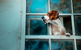 Preview wallpaper Dog look out window, wall