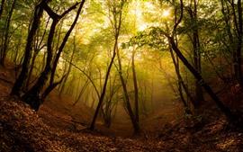 Preview wallpaper Forest, trees, sun, fog, autumn