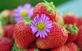 Preview wallpaper Fresh strawberries, pink flower