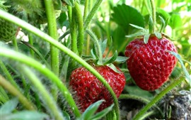 Preview wallpaper Fresh strawberries, stem, leaves