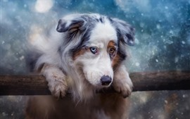 Preview wallpaper Furry dog, snowy, winter