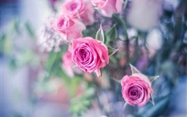 Fondo brumoso, rosas rosadas