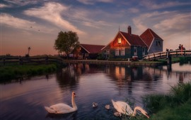 Preview wallpaper Holland, swans, bridge, river, dusk, evening