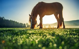 Лошадь, трава, луг, утро, туман, солнце