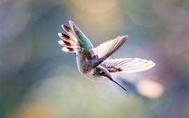 Beija-flor vôo, asas, nebuloso
