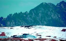 Mountains, trees, snow, winter, white
