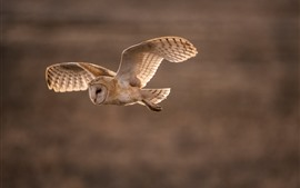 Preview wallpaper Owl flight, wings, dusk