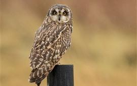 Preview wallpaper Owl, stump, rainy