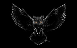 Owl, wings, flight, darkness, creative picture