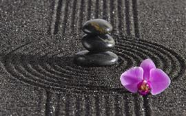 壁紙のプレビュー ピンクの胡蝶蘭、石、黒い砂