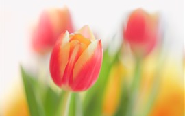 Preview wallpaper Pink yellow petals tulips, flowers, hazy