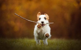Puppy catch a stick and running