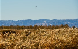 Preview wallpaper Reeds, trees, mountains, bird flight in sky