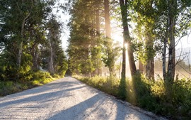 Road, trees, sun rays, river, morning