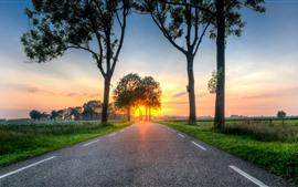 Дорога, деревья, закат, поля, сельская местность