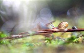 Preview wallpaper Snail, twigs, hazy, nature
