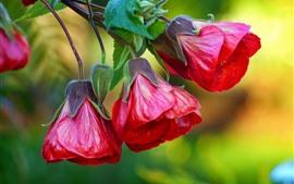 Close-up de três flores vermelhas, fundo nebuloso