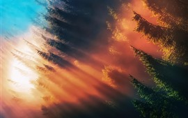 Árvores, floresta, raios de sol, manhã