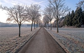 Preview wallpaper Trees, road, frost, winter