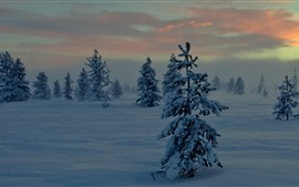Preview wallpaper Trees, snow, dusk, winter, clouds