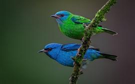 Две птицы, синие и зеленые
