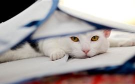 Preview wallpaper White cat, look, yellow eyes, rest